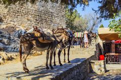 Donkeys for transporting people at the top point of the Acropolis of Lindos. Rhodes Island, Greece stock images