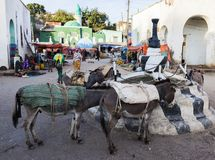 Donkeys wait to be loaded on market square in city of Jugol. Harar. Ethiopia. Royalty Free Stock Images