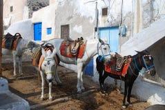 Donkeys waiting passengers at the port of Fira Royalty Free Stock Photo