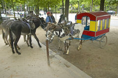 Donkeys waiting to be ridden at donkey ride in park, Paris, France Stock Photos