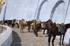 Donkeys waiting for tourists in Santorini Stock Photos