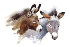 Donkeys Watercolor Animals Illustration Hand Painted. Hand painted Watercolor illustration of Donkeys isolated on white background Stock Image