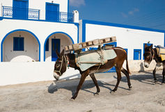 Donkeys work. Donkeys carry weight, Thirassia island, Santorini Greece Royalty Free Stock Images