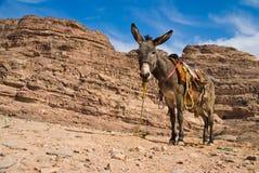 Donky in de berg royalty-vrije stock foto's