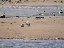 Donmouth Locak naturreserv som är norr Royaltyfri Bild