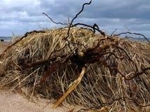 Donmouth Locak naturreserv som är norr Royaltyfri Foto