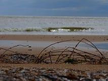 Donmouth Locak naturreserv som är norr Fotografering för Bildbyråer
