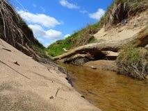 Donmouth Locak naturreserv som är norr Arkivfoton
