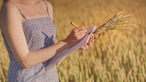 Données d'écriture d'agronome de femme dans le domaine de blé Concept de recherches d'agriculture