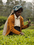 Donna 4 della Sri Lanka Fotografia Stock Libera da Diritti