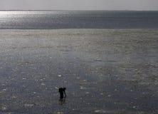 Donna africana alla marea bassa Fotografie Stock Libere da Diritti