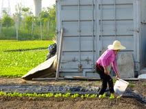Donna agricola che fa il lavoro dell'azienda agricola nel campo Fotografia Stock Libera da Diritti