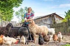 Donna al suo allevamento di pecore, animali Immagini Stock