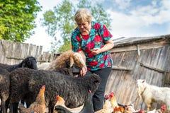Donna al suoi allevamento di pecore, animali e natura Immagine Stock
