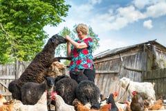 Donna al suoi allevamento di pecore, animali e natura Fotografia Stock