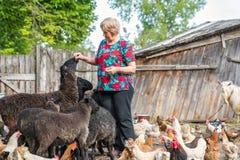 Donna al suoi allevamento di pecore, animali e natura Fotografie Stock