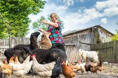 Donna al suoi allevamento di pecore, animali e natura Fotografia Stock Libera da Diritti