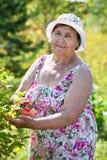 Donna allegra senior sul lavoro nel proprio giardino ad estate Fotografia Stock Libera da Diritti