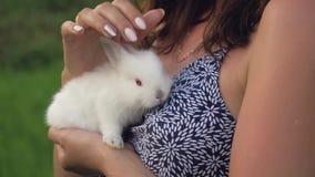 Donna alta vicina che tiene un piccolo coniglio del cucciolo nelle sue armi e che lo segna sulla testa video d archivio