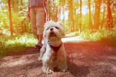 donna ambulante del cane fotografia stock libera da diritti