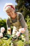 Donna anziana che fa il giardinaggio nel cortile Fotografie Stock Libere da Diritti