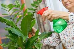 Donna anziana che spruzza una pianta con acqua pura da una bottiglia dello spruzzo Fotografia Stock Libera da Diritti