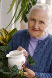 Donna anziana con le piante Immagine Stock