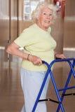 Donna anziana con Zimmerframe Immagini Stock