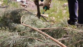 Donna anziana del primo piano che per mezzo del coltello sul ramo dell'albero per fare legna da ardere a casa HD stock footage