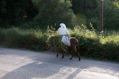 Donna anziana su un asino nella provincia Immagine Stock