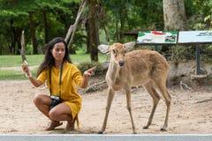 Donna asiatica che prende in giro con i cervi del ` s di Eld per la presa della foto Fotografia Stock Libera da Diritti