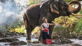 Donna asiatica con l'elefante in insenatura, Tailandia stock footage