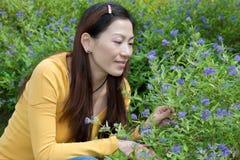 Donna asiatica orientale che accovaccia per selezionare i fiori Immagini Stock Libere da Diritti