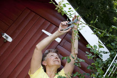 Donna attiva a Rose Garden fotografie stock