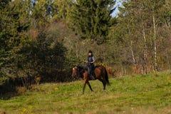 Donna attraente elegante che monta un cavallo Immagine Stock