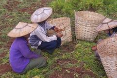 Donna Burmese fotografia stock libera da diritti
