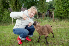 Donna che alimenta le giovani pecore fotografia stock