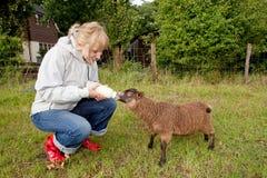 Donna che alimenta le giovani pecore immagini stock