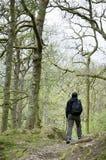 Donna che cammina attraverso il terreno boscoso Immagini Stock