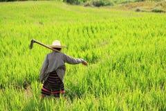 Donna che coltiva la forcella della holding al giacimento a terrazze del riso Fotografie Stock Libere da Diritti
