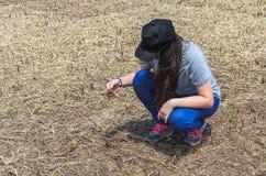 Donna che controlla la radice della soia dopo il raccolto Fotografia Stock