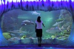 Donna che esamina gli squali in acquario di vita di mare in Sydney New South Wales Australia fotografia stock