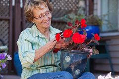 Donna che esamina il POT di fiore Fotografie Stock