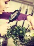Donna che esamina tramite la lente il canestro delle verdure Immagine Stock Libera da Diritti