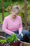 Donna che fa il giardinaggio con il gatto Fotografie Stock