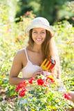 Donna che fa il giardinaggio con le rose immagine stock libera da diritti