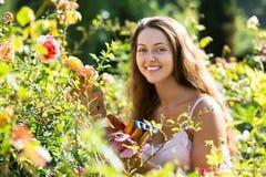 Donna che fa il giardinaggio con le rose Immagini Stock Libere da Diritti