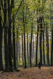 Donna che fa un'escursione nella foresta di autunno Fotografia Stock