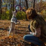 Donna che gioca con il cane nel parco di autunno Fotografia Stock
