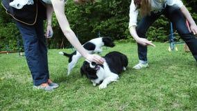 Donna che gioca con il suo cane di border collie, gettante il frisbee archivi video
